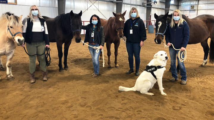 The Lethbridge Therapeutic Riding Association and others have partnered with Alberta Health Services therapy aide Hannah Yunick, left, recreation therapists Heidi Davis and Brandy Tonin, and program coordinator Eilish Short, to create the Equine Wellness Connection. Joining in the photo op are Arlo the dog and his equestrian pals Toby, Scooter, King and Princess.